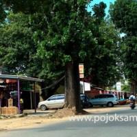 Deret Pohon Mahoni sebagai Elemen Lanskap Heritage pada Aksis Struktur Ruang Kota Kolonis di Kota Metro